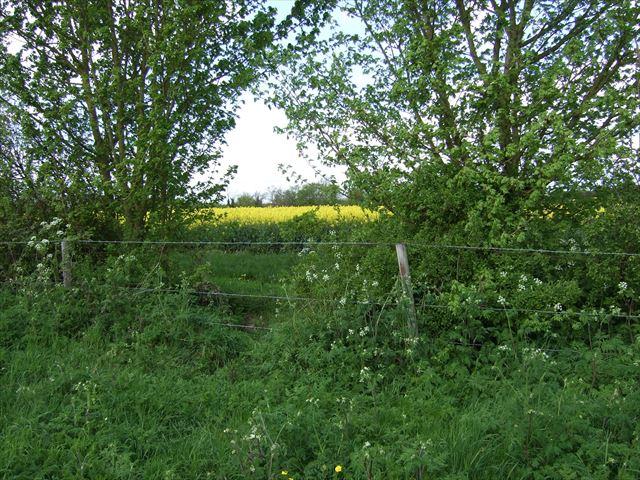 イギリスケンブリッジ・グランチェスターへのフットパス(grantchester foot path)