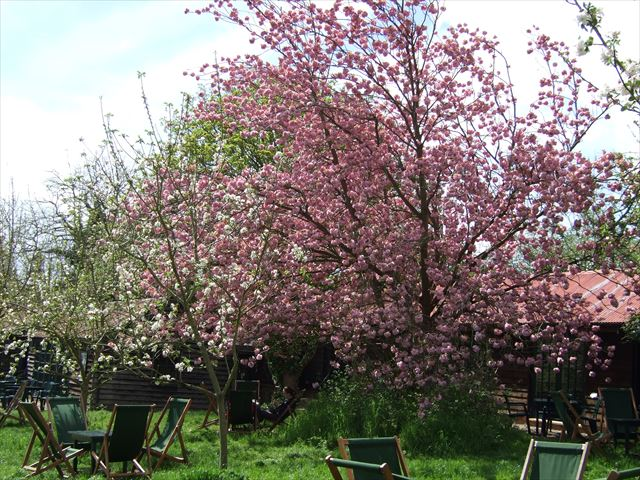 グランチェスターオチャードティーガーデン(grantchester orchard tea garden)