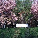 ケンブリッジ・ニューナムランゲージセンター正面(春)