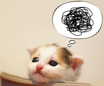 後悔する猫