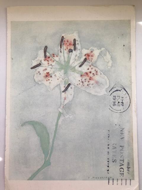 Piet Mondrian : Lily, after 1921 絵葉書