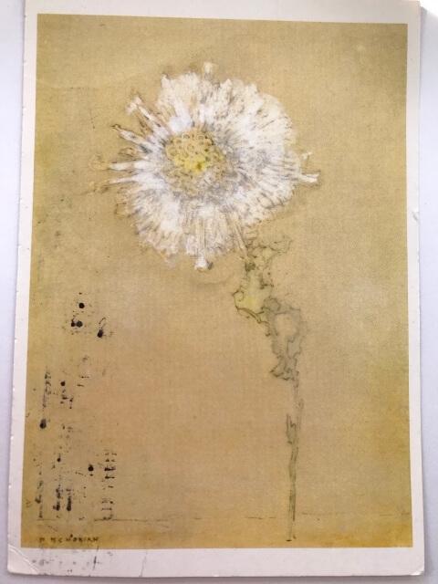 Piet Mondrian : Chrysanthemum, 1908 絵葉書